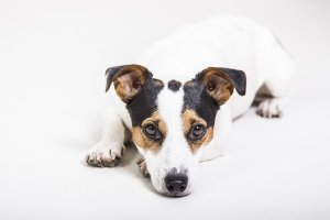 Is my dog normal? 10 weird dog behaviours explained