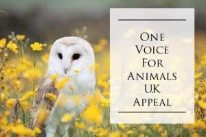 One Voice for animals UK