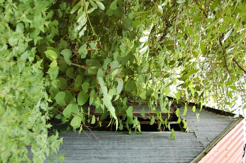 How to Kill Japanese Knotweed  The Japanese Knotweed Company