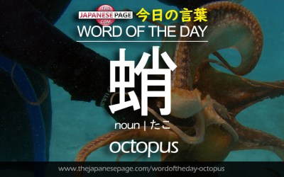 Beginner Word of the Day – 蛸 [octopus]