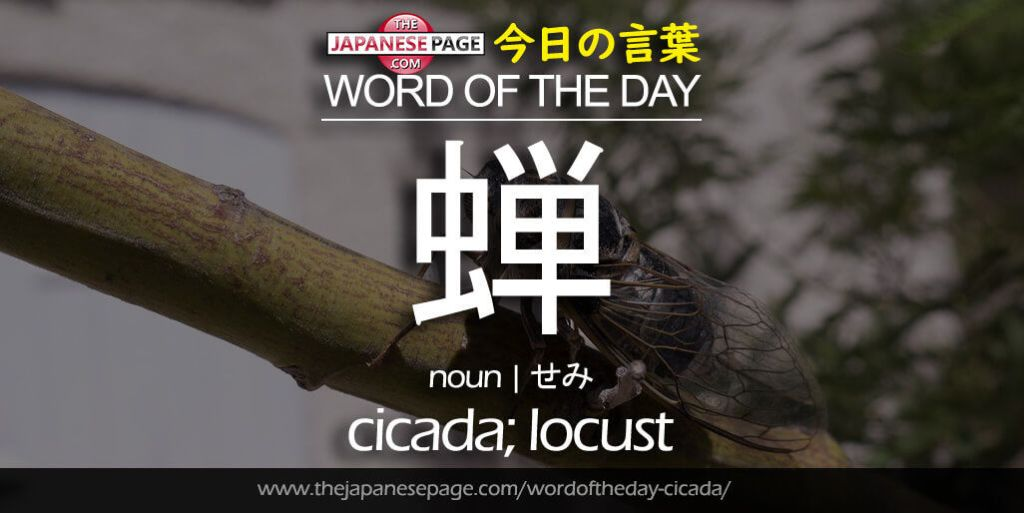 The Japanese Page Word of The Day - Cicada