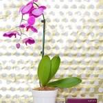 euphoria Calvin Klein: A Radiant Gift For Mother's Day #MC