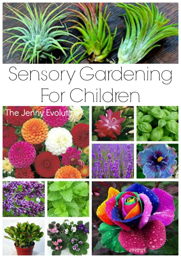 Sensory Garden Ideas For Children The Jenny Evolution