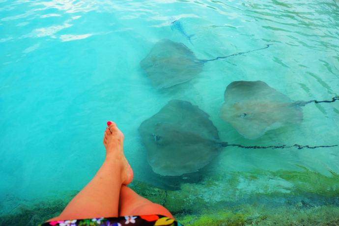 Stingrays Maldives