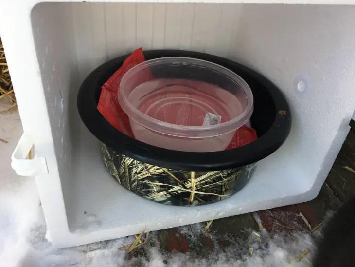 Water bowl in styrofoam cooler