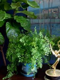 Plants you can grow without sunlight