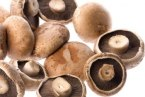 Do you suffer from Allergies? Try Reishi mushrooms