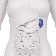 Tapeworm, Amoebas, Worms...Intestinal Parasites?  Symptoms, prevention and natural treatment