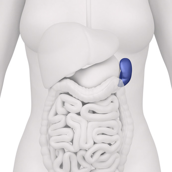 Tapeworm, Amoebas, Worms… Intestinal Parasites? Symptoms, prevention and natural treatment