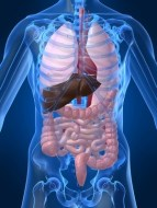 Hepatic Cirrhosis: Causes, Natural Remedies, and more...