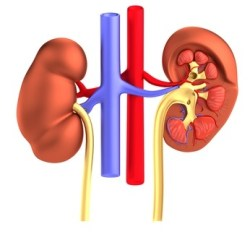 Pyelonephritis: Causes, Diet and Natural Treatment