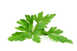 Is Parsley good for bad breath? Can it remove halitosis?