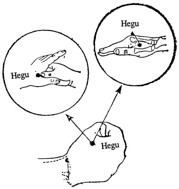 Httpswiring Diagram Herokuapp Compostdenture Prosthodontics