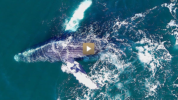 Whales as you've never seen them before
