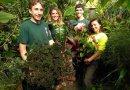 Lyon Arboretum's fall plant sale on Saturday