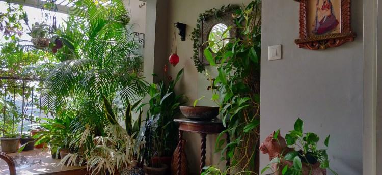 Jayashree Rajan's garden apartment tour on The Keybunch: green balcony