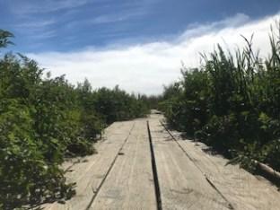 Bridge Path at Clam Beach