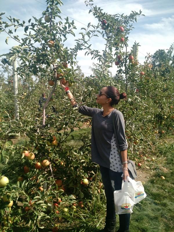 Apple picking Long Island