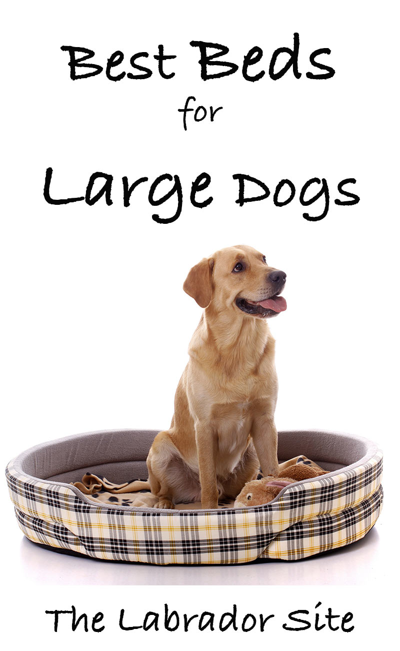 Best Large Dog Beds Reviews Of The Top 30 Beds For Large Breeds