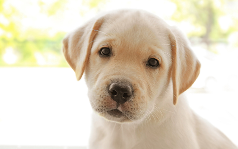 girl dog names Girl Pitbull Dog Names