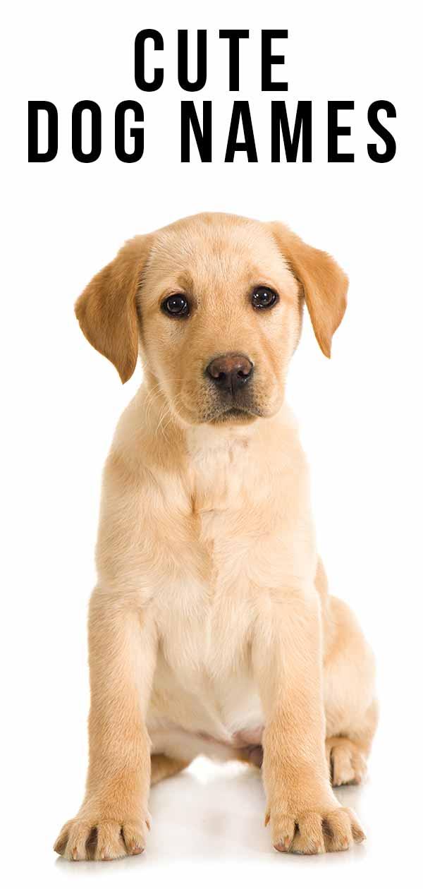 cute dog names 125