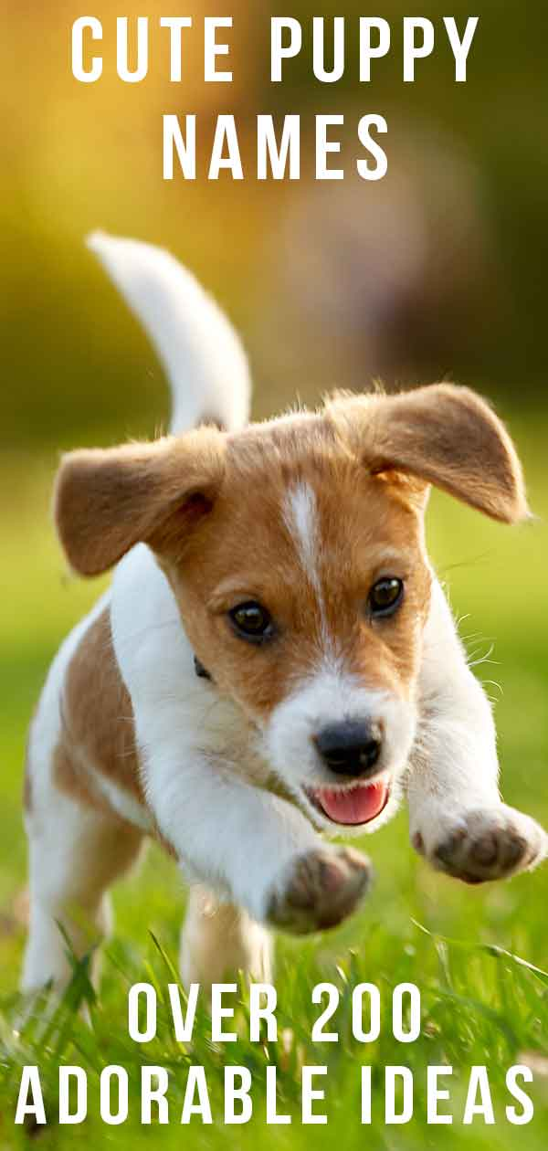 cute puppy names over