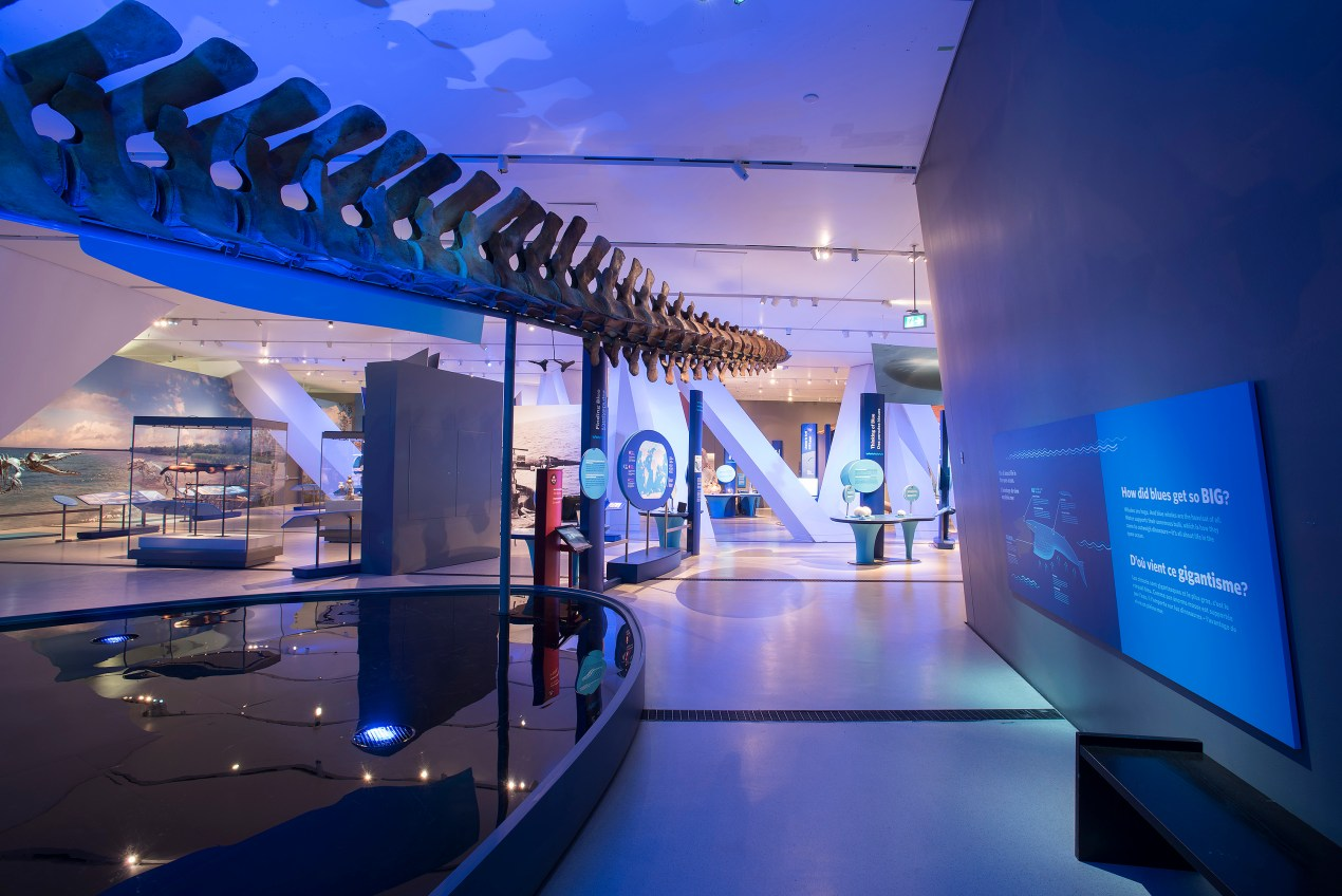 The Blue Whale Story at The Royal Ontario Museum | The Lady-like Leopard