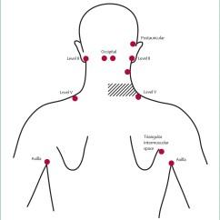 Diagram Lymph Nodes On Back Of Head Rj11 Socket Wiring Australia The Gallery For Gt Occipital Node