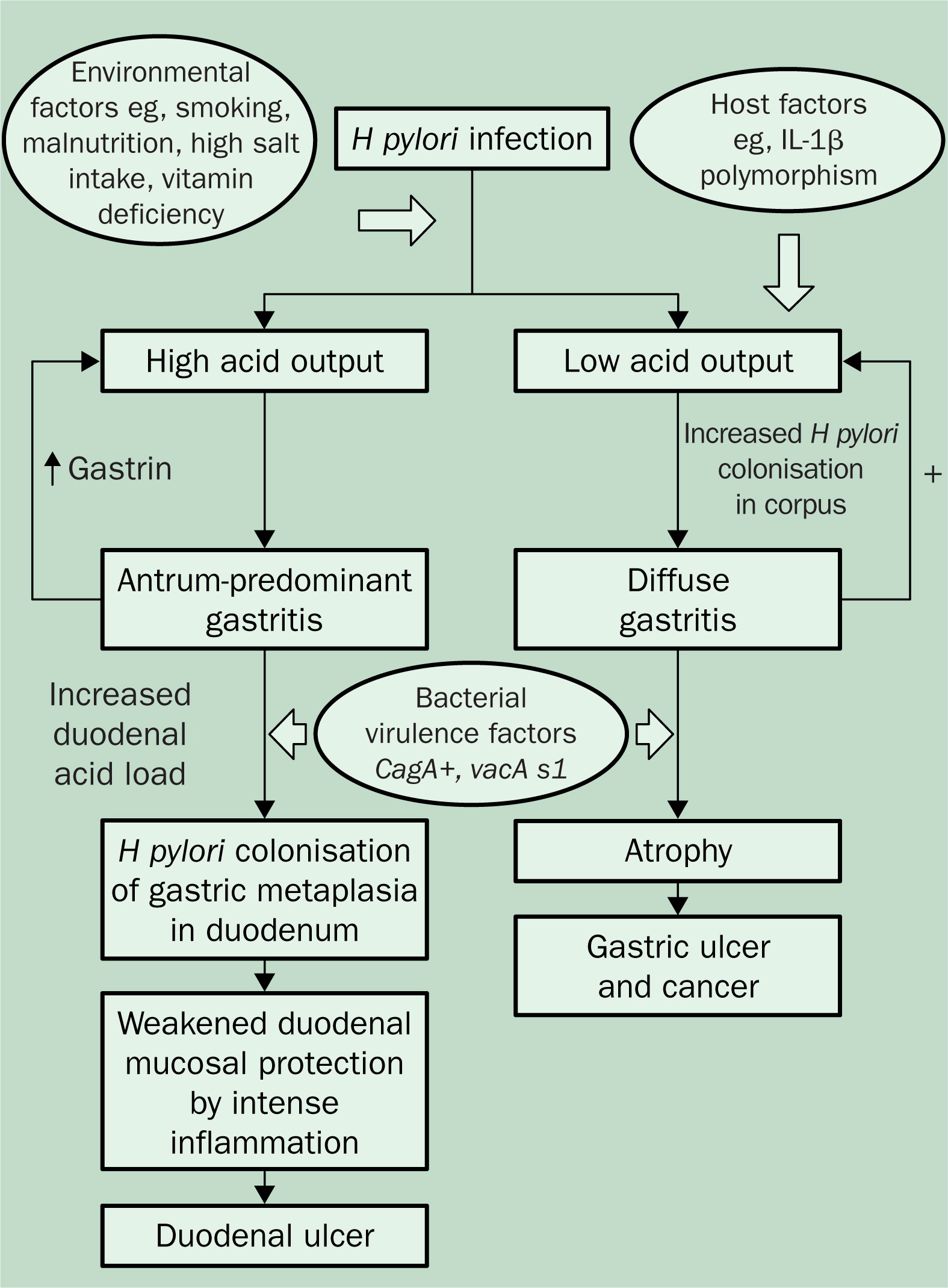 pathophysiology of peptic ulcer disease diagram 2001 saturn sl stereo wiring the lancet
