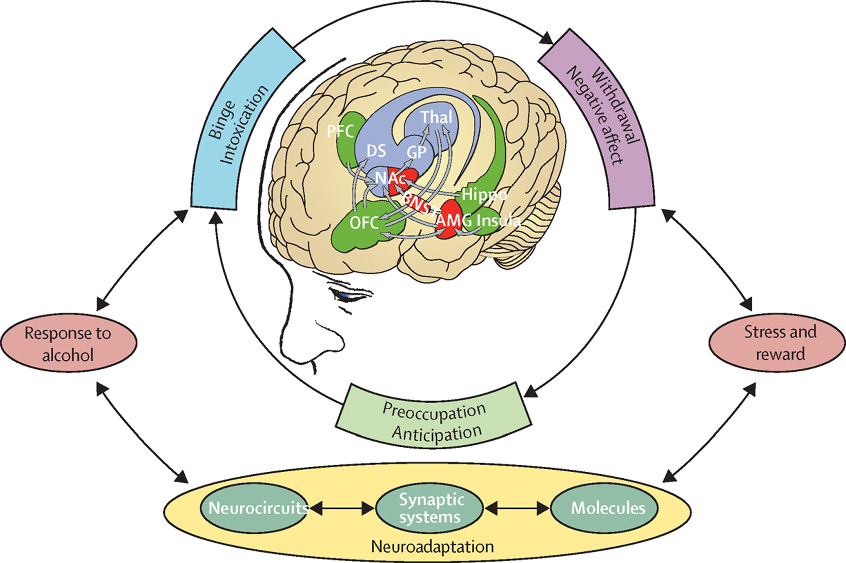 Brain Disease Model Of Addiction Why Is It So