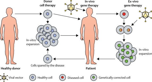 in vivo gene therapy diagram honeywell dt90e digital room thermostat wiring lancet commission stem cells and regenerative medicine the