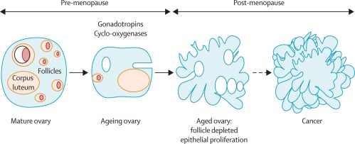 small resolution of  download ppt follicle depletion explains the