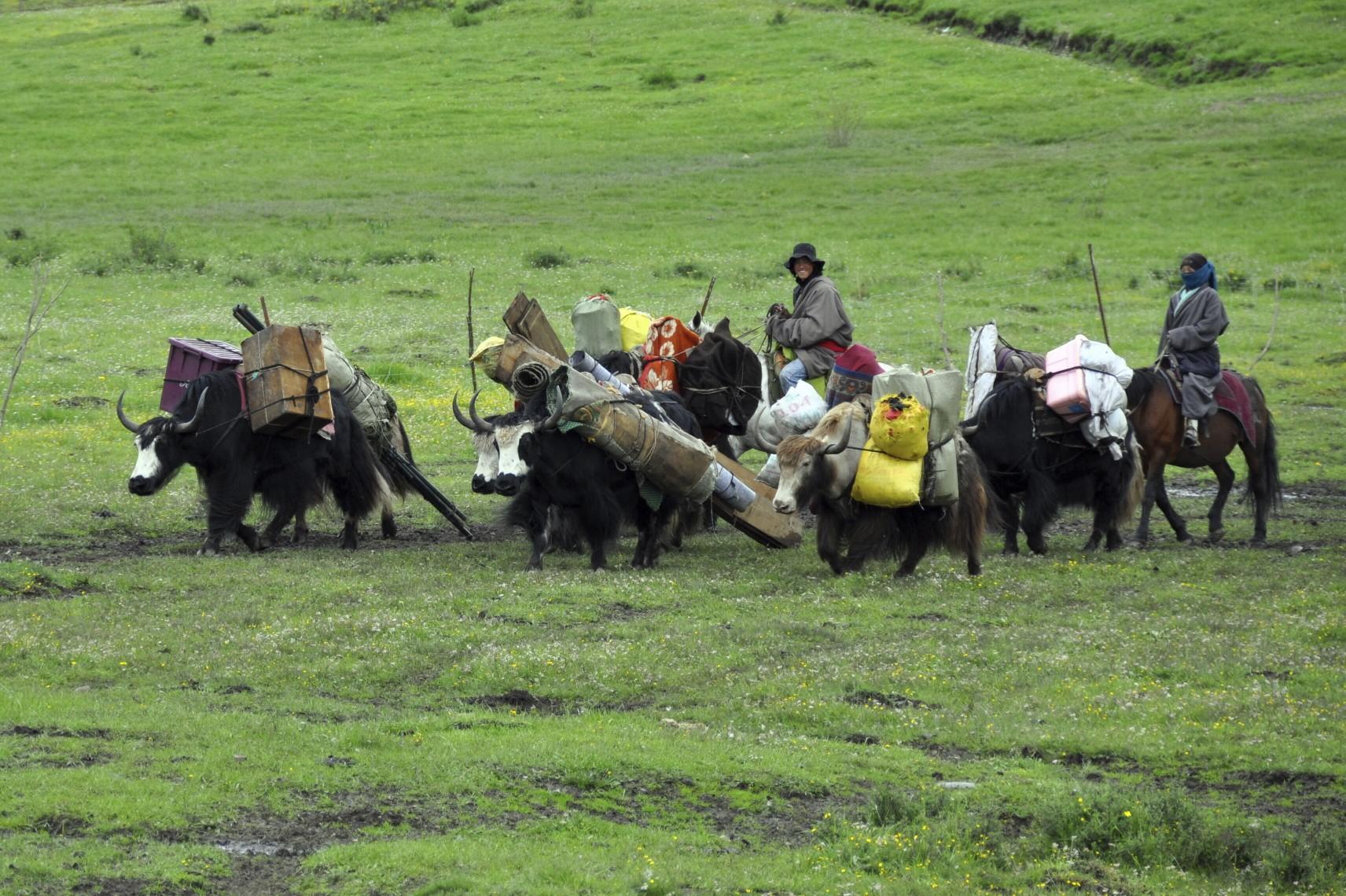 The Life at Tibetan Plateau