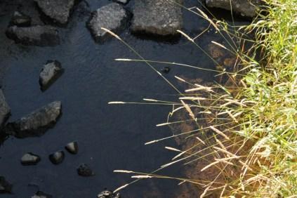river, rocks, grasses