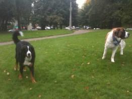 IMG_0551 Bruiser & Skyler at the Dog Park in Portland, Oregon - www.thelandrovers.com
