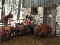 IMG_2007 winter feeding the animals
