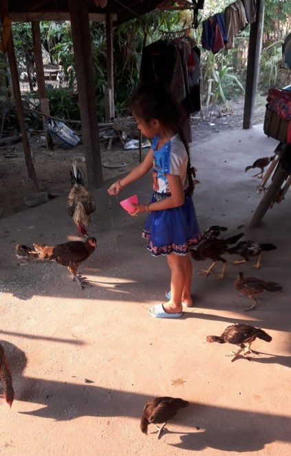 Anna feeds the chickens after school.