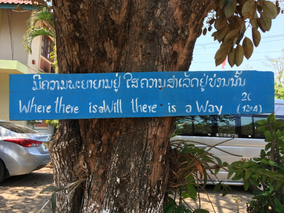 "Tree on campus of the ""Teacher Training College"" in Savannakhet - hopefully another new partner before too long!"