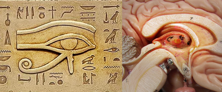 mysteries of the pineal gland ignored by mainstream science, Sphenoid