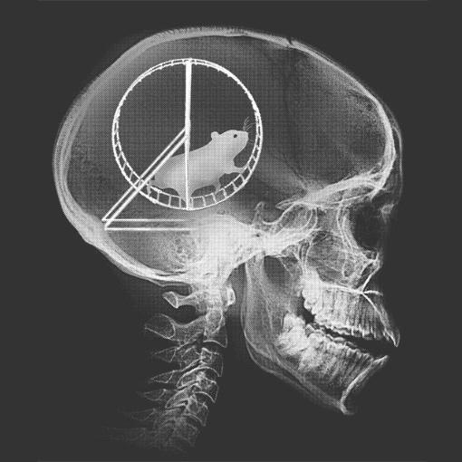 hamster-wheel-skull-x-ray-t