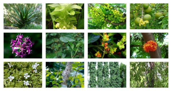 Scientists Identify 28,000 Medicinal Plants That Treat Ailments from Cancer to Diabetes