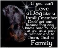 love a dog like a family member