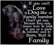 love a dog like a family member