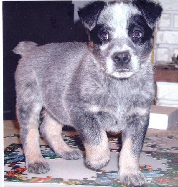Bullseye puppy