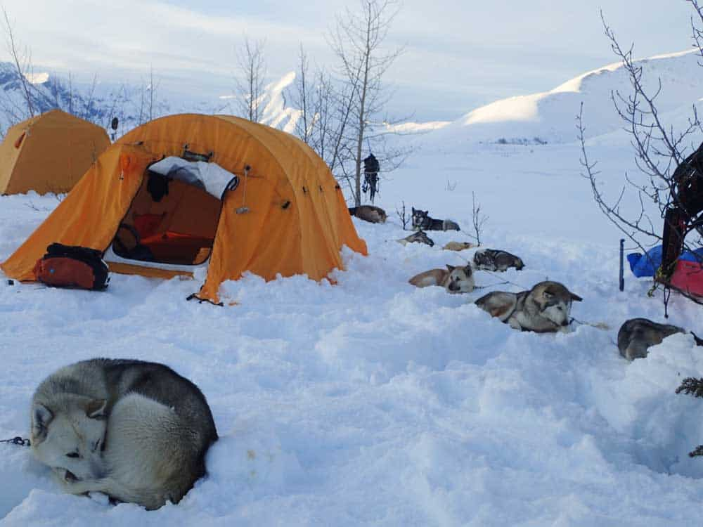 9 Easy Tips For Winter camping with Your Dog