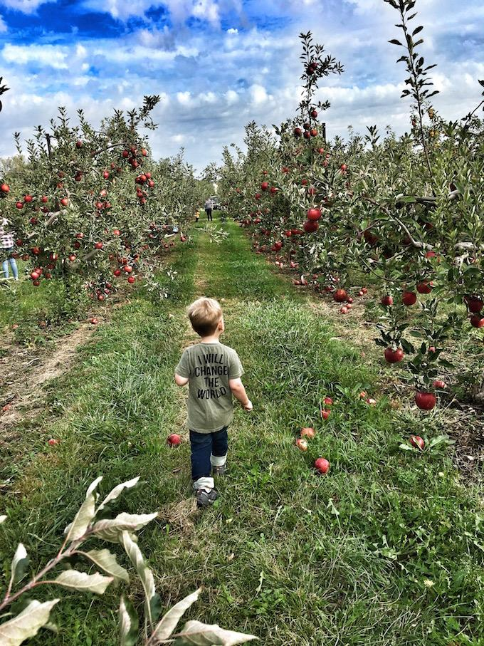 three year old in apple orchard