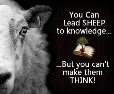 SHEEP-TO-KNOWLEDGE