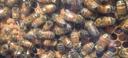bees_by_lauren