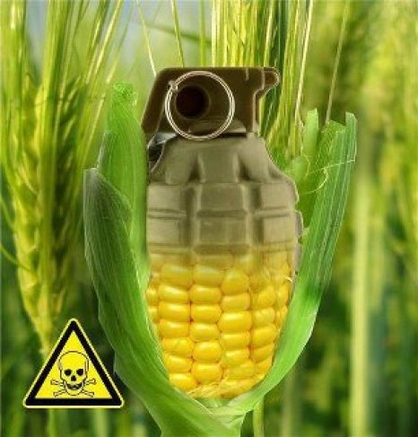 gmo invisible danger