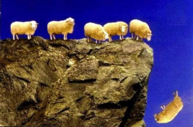 sheep_off_cliff_insert